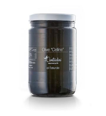 Olive Celline In Salamoia